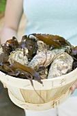 Frau hält Korb voll frischer Austern
