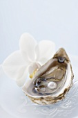 Fresh oyster with pearl, white orchid beside it
