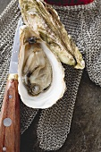 Fresh oysters, oyster glove and knife
