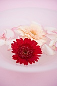 Rose petals and gerbera in bowl of water