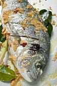 Marinated gilthead bream with lemon grass