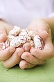 Child's hands holding several borlotti beans