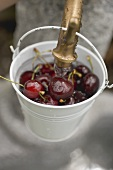 Washing cherries in bucket under tap