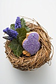 Easter biscuit (purple chick) & grape hyacinths in Easter nest