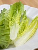 Romaine lettuce leaves on a white plate