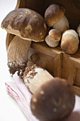 Fresh ceps on drawer unit