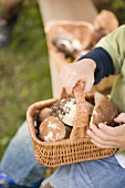 Small boy holding a basket full of ceps in a wood