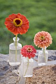 Three summer flowers in glass bottles on stone wall