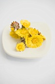 Coltsfoot flowers on a white plate