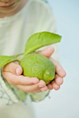Small boy holding a fresh lime with leaves