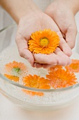 Hands holding marigold over bowl of soapy water