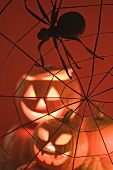 Pumpkin lanterns and spider in web (Halloween decoration)