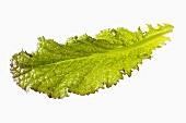 A red mustard leaf