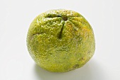 An ugli fruit