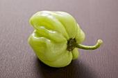Green Habanero chilli