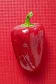 Red pepper with drops of water on red background