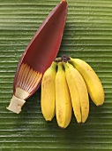 Bunch of bananas and banana flower