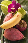 Exotic fruit still life with orchid