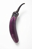 Thin purple aubergine with drops of water