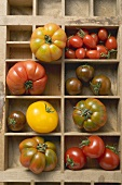 Various types of tomatoes in type case