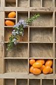 Kumquats and rosemary in type case