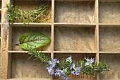 Various herbs in type case