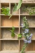 Various fresh herbs in type case