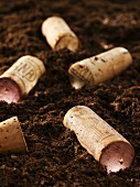 Several wine corks on soil