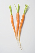 Three young carrots