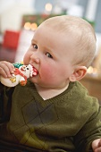 Baby biting into Christmas biscuit