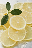 Lemon slices surrounded by ice cubes