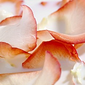 Rose petal milk bath (detail)