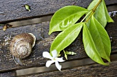 Snail and sprig of jasmine with flower