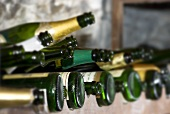 Sparkling wine bottles in wine rack