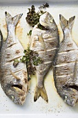Roasted sea bream with parsley (overhead view)