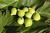 Green figs on fig leaves