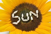 Sunflower with the word SUN written in sunflower seeds