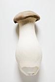 A king oyster mushroom