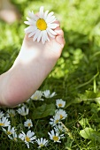 Child's foot with marguerite
