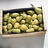A crate of pears (variety 'Guyot')
