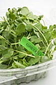 Salad leaves in plastic container