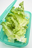 Lettuce in food storage box