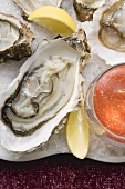 Fresh oysters with lemon and tomato dip