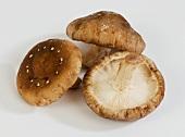 Three shiitake mushrooms