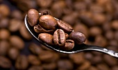 Coffee beans on spoon against background of coffee beans