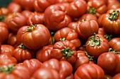 Oxheart tomatoes, full-frame