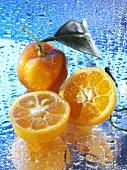 Mandarinen auf spiegelnder Fläche mit Wassertropfen