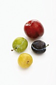 Red plum, yellow plum, damson and greengage