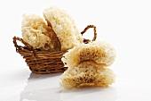 Cauliflower mushrooms in and beside basket