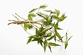 Praew leaves (Vietnamese coriander)